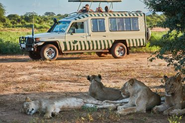 Game drive with lions