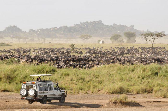 Game drive, Serengeti