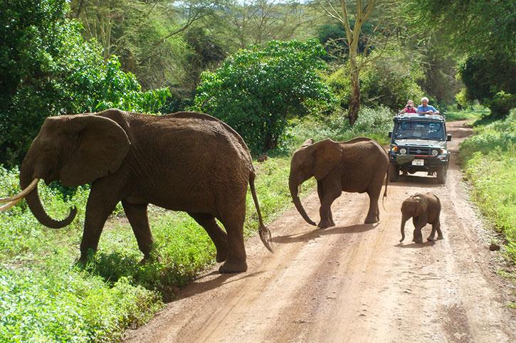 Elephants on a game drive