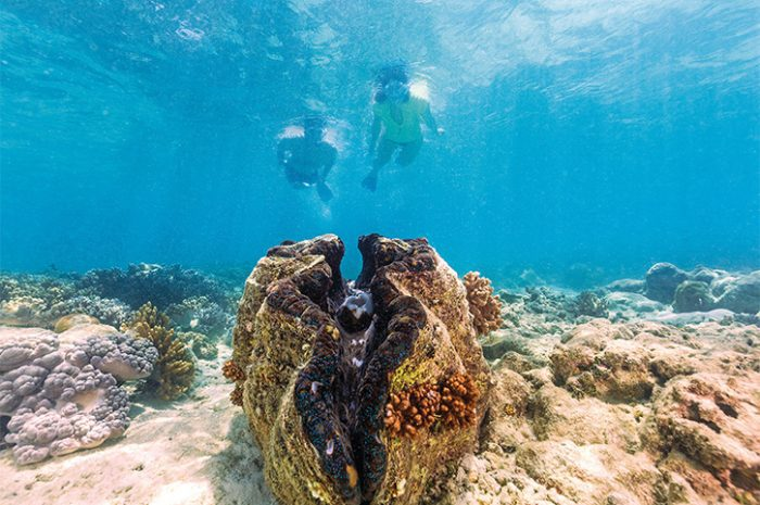 Great Barrier Reef, North Queensland