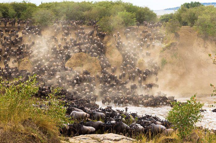Great Wildebeest Migration, Masai Mara