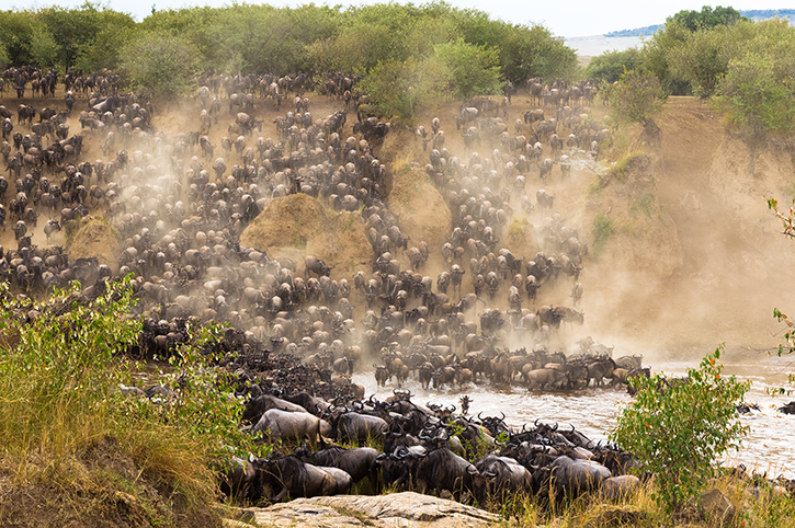Great Wildebeest Migration, Masai Mara