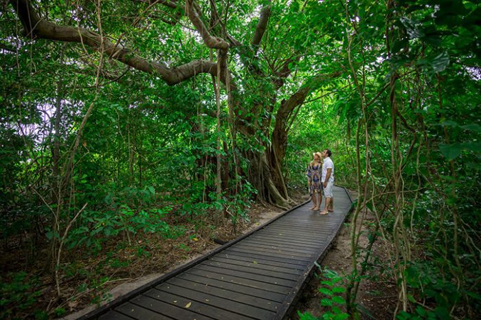 Green Island Rainforest Walk