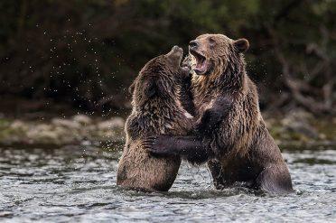 Grizzly Bear Hug, Canada