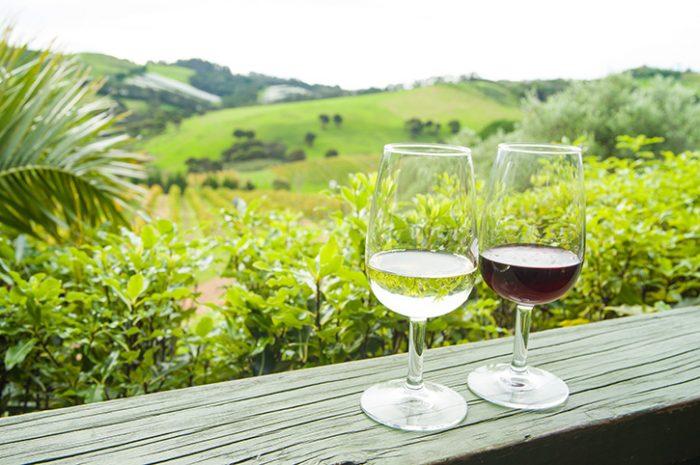 Waiheke Wine Tasting