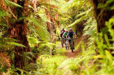 Rotorua Forest