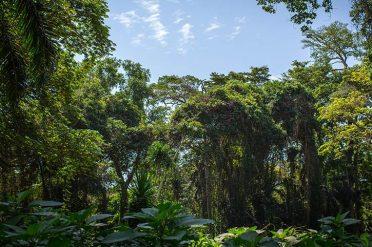 Highlights Of Uganda Bwindi Forest