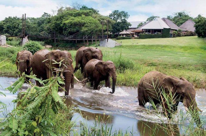 Elephants, Hippo Hollow