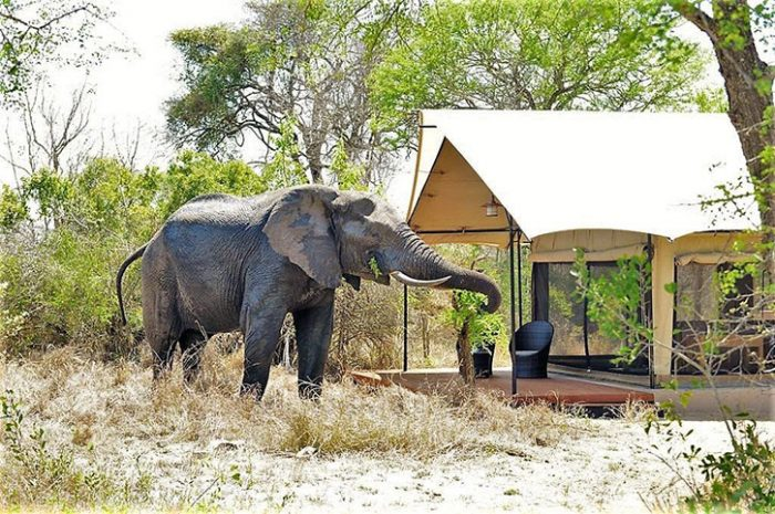Luxury tent, Honeyguide Mantobeni Camp