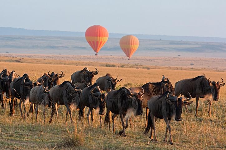 Hot Air Balloon Ride in the Masai Mara