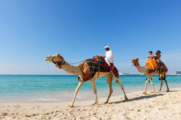 Camel on Beach in Dubai