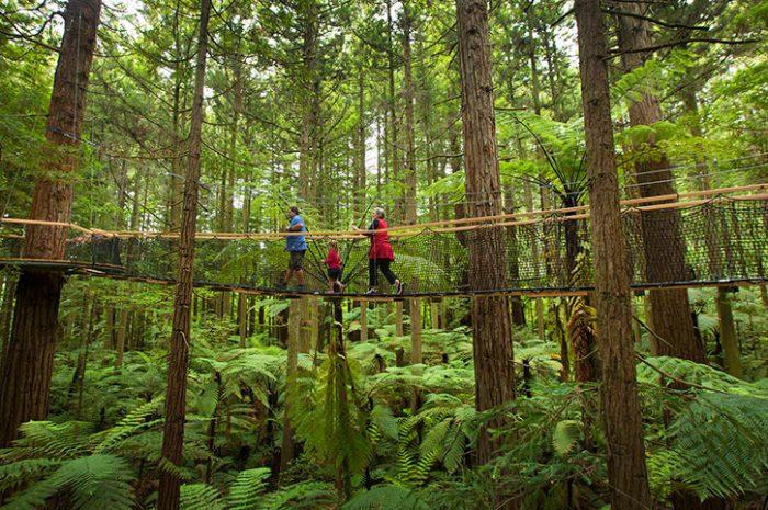 Redwoods Treetop Walk
