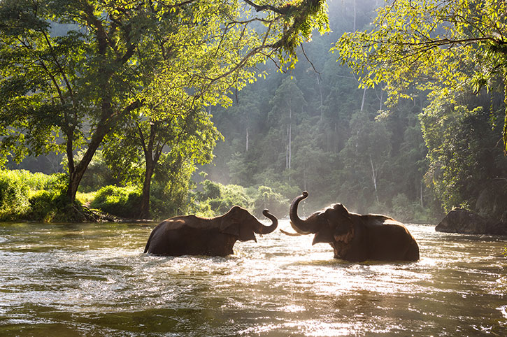Elephants, Northern Thailand