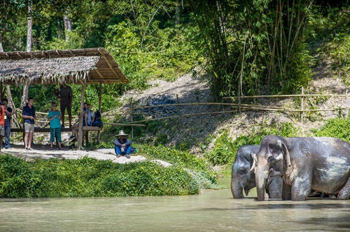 Phuket Elephant Sanctuary