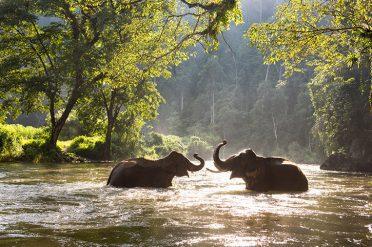 Kanchanaburi Elephants River Kwai Explorer