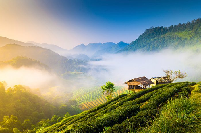Chiang Mai Hills