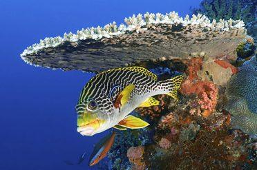 Komodo Fish