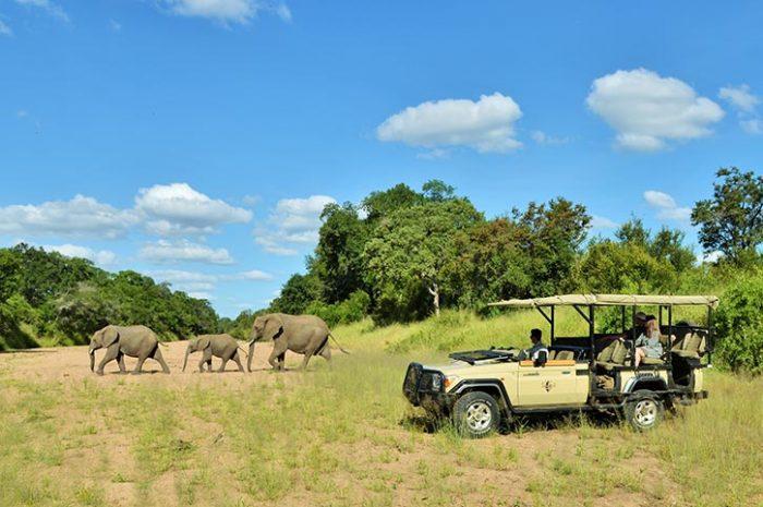 Game drive, Imbali Safari Lodge