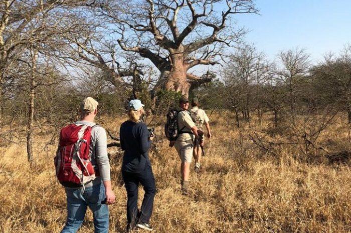 Walking safari, Imbali Safari Lodge