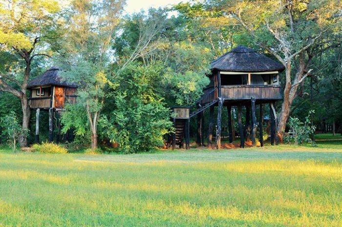 Ivory Lodge Tree House Exterior