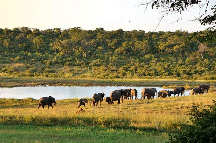 Ivory Lodge Wild Elephant Herd