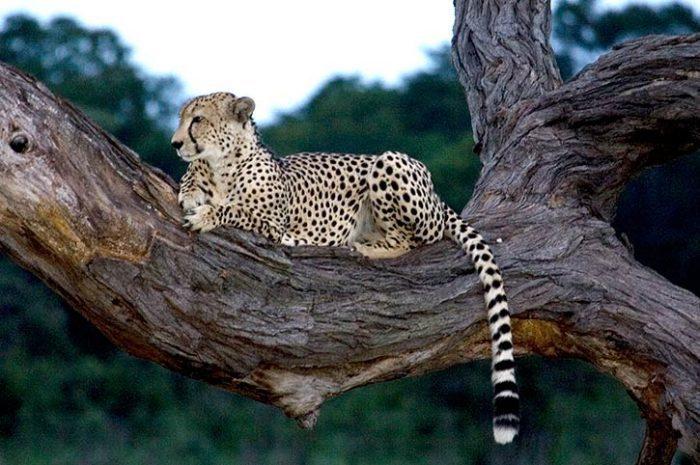Ivory Lodge Wildlife