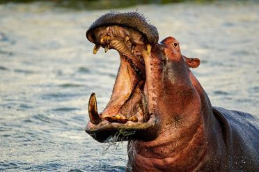 Hippo Chobe Nature Reserve