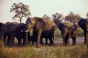 Mundumu Elephants