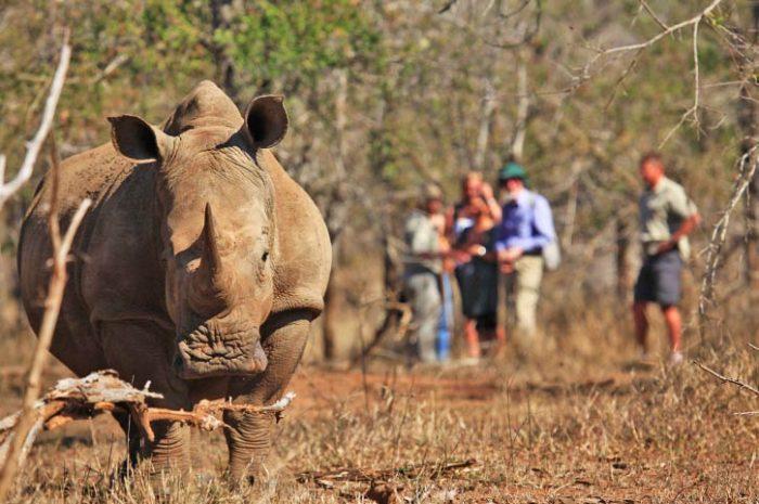 Rhinos, Matopos National Park