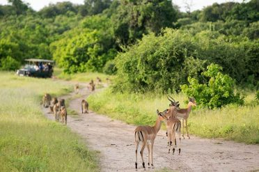 Jenmans Botswana Wildlife Breakaway Hwange