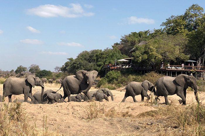 Jock Safari Lodge elephants in riverbed