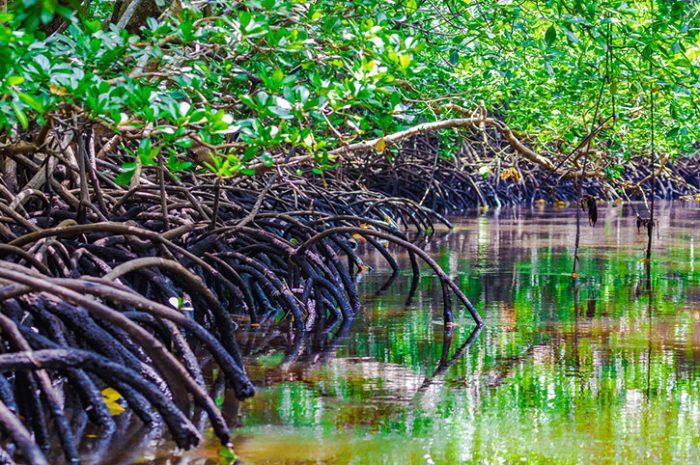 Jozani Forest, Zanzibar