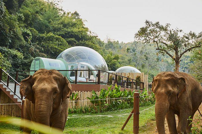 Jungle Bubbles at Anantara
