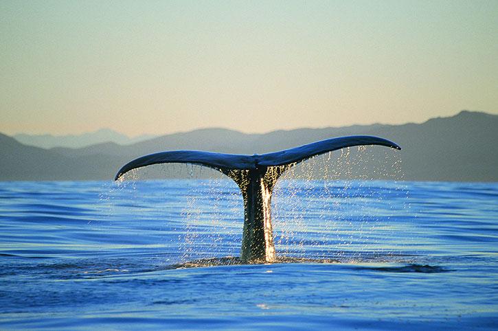 Kaikoura Whale Spotting