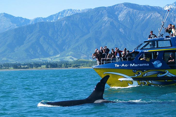 5 Unmissable Day Trips from Christchurch