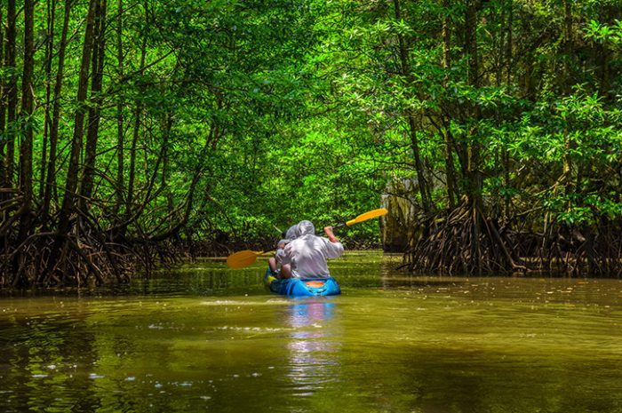 Kayaking Mangrove Forest