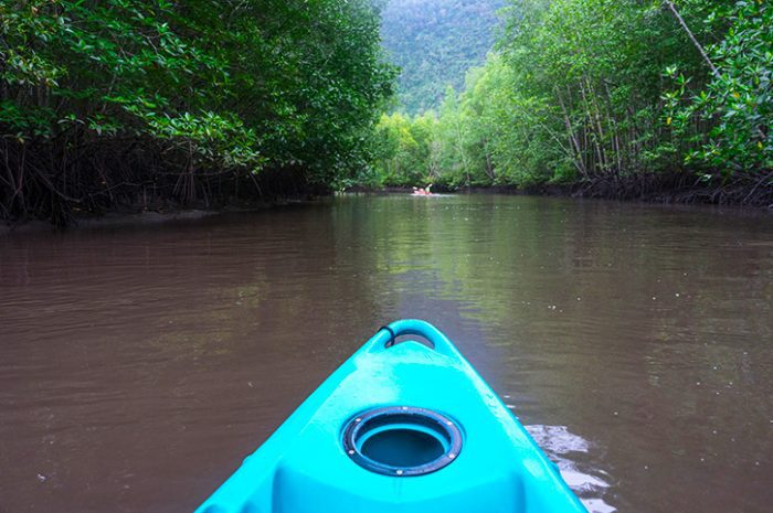 Kayaking Mangrove River