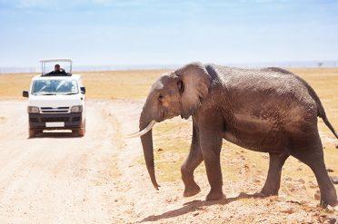 Elephant, Amboseli National Park
