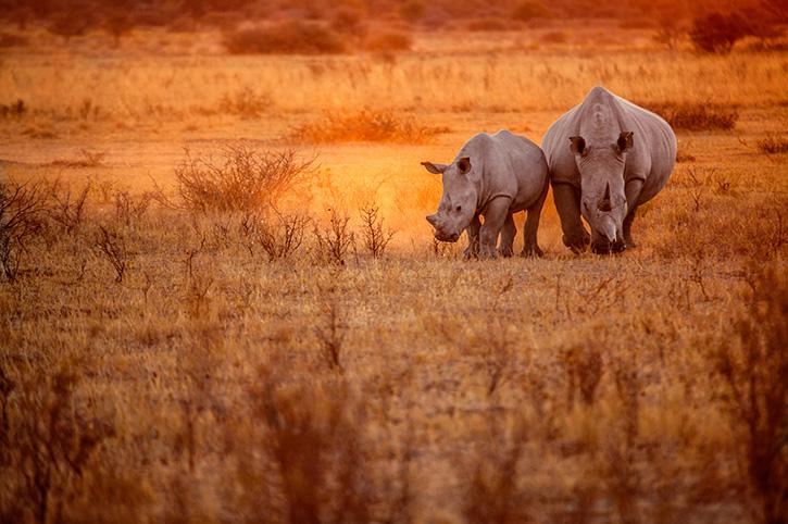 Khama Rhino Sanctuary Botswana