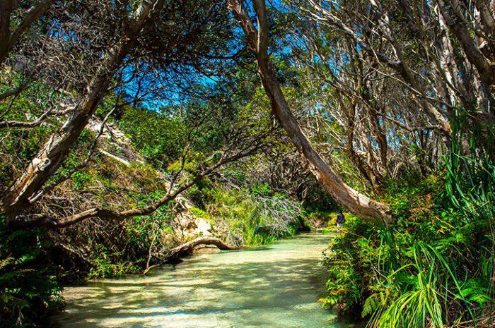 Kingfisher Bay Creek