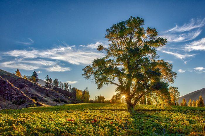 Kinross Tree Sunset