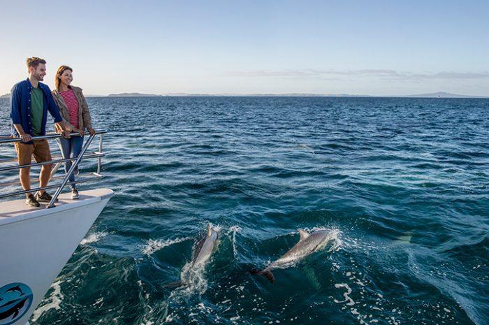 Koombana Bay Dolphins, Perth
