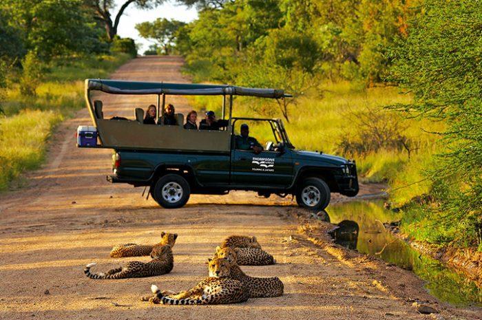 Cheetahs, Kruger National Park