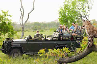 Kruger Game Drive