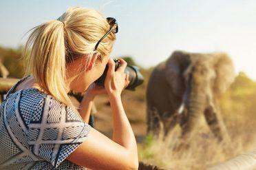 Photographing Elephant, Kenya