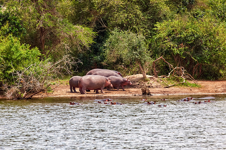 Lake Mburo National Park, Uganda