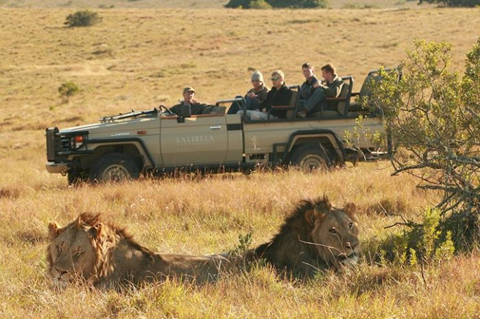Lalibela Game Reserve Game Experience