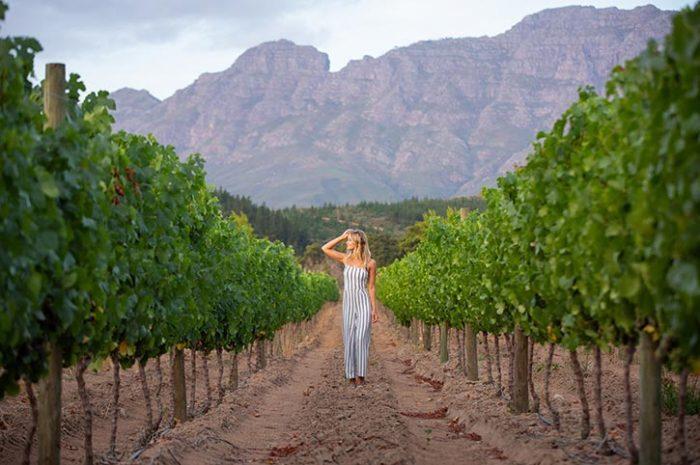 Lanzerac Wine Estate Vinyards