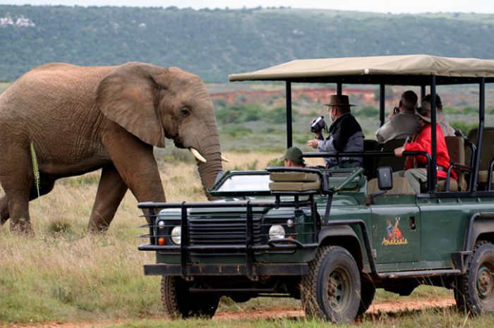 Leeuwenbosch Country House Game Drives