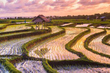 Bali Rice Paddy
